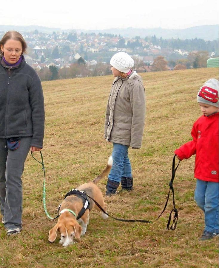 Kennenlernen von hunden