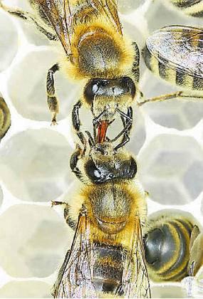 Heiße Bienen