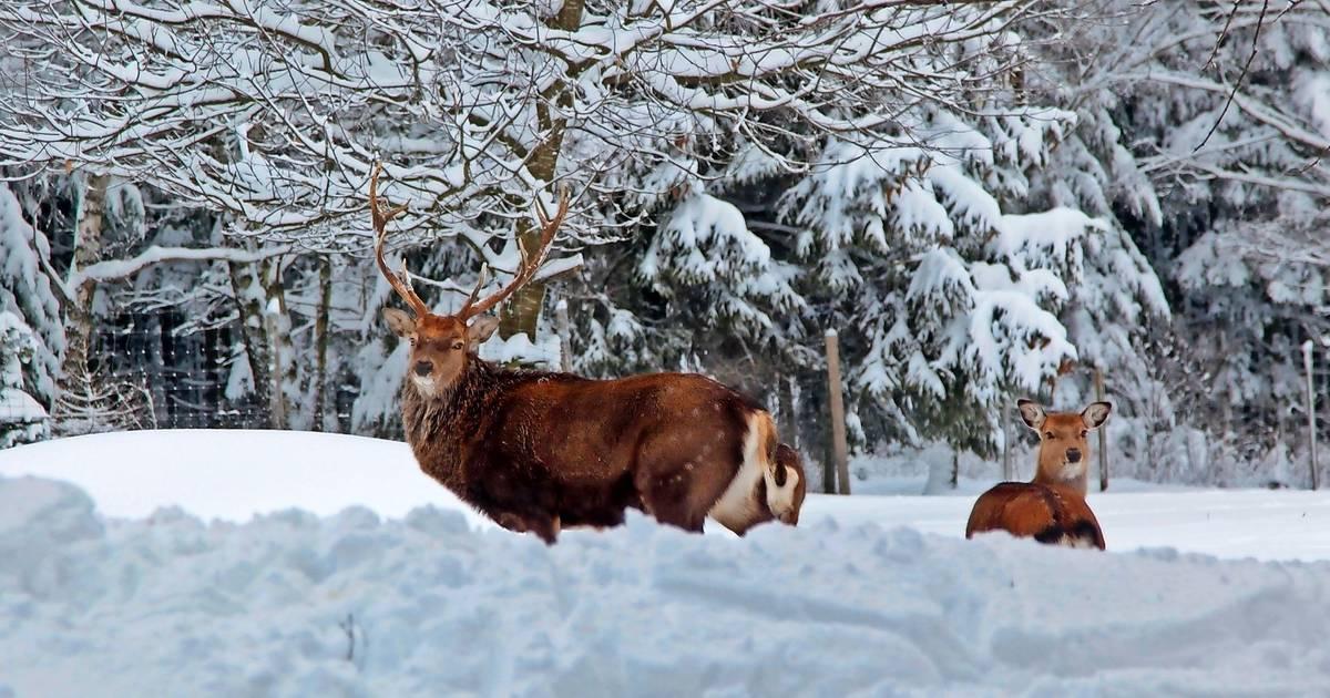 Wälder im Kreis Merzig-Wadern: Der alte Konflikt: Wald vor Wild?