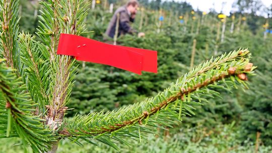 Weihnachtsb ume oh tannenbaum zum gleichen preis - Lichternetz fa r tannenbaum ...