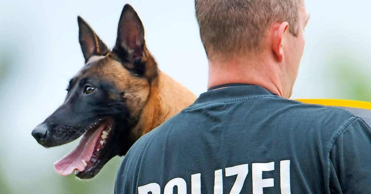 berliner polizeihunde erhalten lebenslange rente. Black Bedroom Furniture Sets. Home Design Ideas