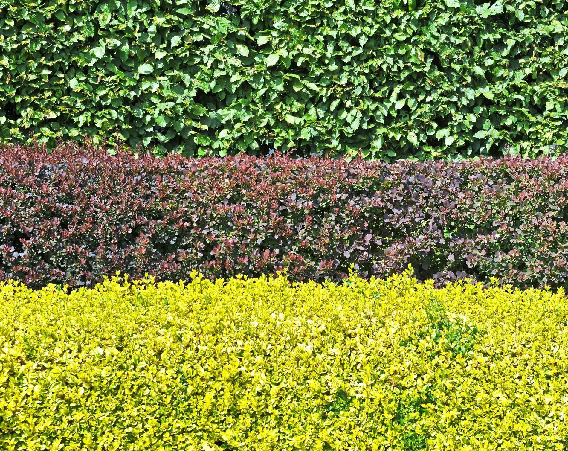 Welche Gartenhecken Pflanzt Man Als Sichtschutz Oder Windschutz