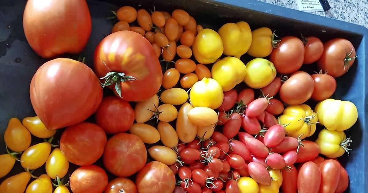 wissenswertes ber alte tomatensorten. Black Bedroom Furniture Sets. Home Design Ideas